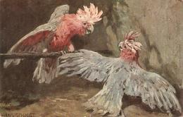 """Hans Schmidt. Cockatogs Brds"" Tuck Oilette Brds Of Plumage Series PC # 9779 - Tuck, Raphael"