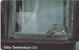 Sweden - Bird - Spotted Flycatcher - Sweden
