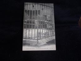 Paris 5 ème . Jardin Des Plantes .Inondations De 1910. Les Ours Polaires .Voir 2 Scans . - Paris (05)