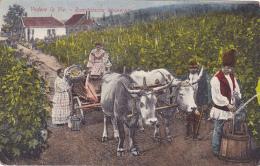 Vedere La Vie - Rumänische Weinernte (scène De Vendanges, Attelage De Boeufs) Criculé Date éffacée - Romania