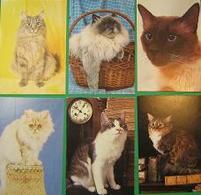 Pocket Calendars  CATS  1994  Russia - Tamaño Pequeño : 1991-00