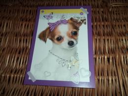 Hund Dog Chien Chihuahua Postcard Postkarte - Chiens