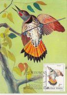 D4068- RED SHAFTED FLICKER, BIRDS, MAXIMUM CARD, 1985, HUNGARY - Climbing Birds
