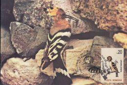 D4080- HOOPOE, BIRDS, MAXIMUM CARD, 1994, ROMANIA - Climbing Birds