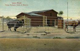 Peru, LIMA, Parque Zoologico, Bisontes, ZOO (1910s) E. Polack-Schneider Postcard - Peru
