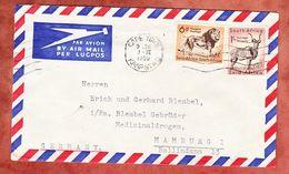 Luftpost, MiF Loewe U.a., Cape Town Kaapstad Nach Hamburg 1959 (51479) - Storia Postale