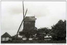 ZOMERGEM (O.Vl.) - Molen/moulin - De Verdwenen Bekemolen In 1954, Samen Met Bijhorende Rosmolen. - Zomergem