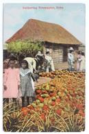 Gathering Pineapples, Cuba, 1915 - Cuba