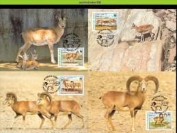 Nbx244mb WWF ZOOGDIEREN STEPPENSCHAAP SHEEP STEPPENSCHAF Ovis Vignei URIAL MAMMALS QWA 1998 MAX - Maximumkaarten