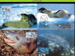 Nbh294mb WWF ZEEHOND SEAL VOGELS PINGUIN BIRDS PENGUIN VÖGEL AVES OISEAUX AUSTRALIAN ANTARCTIC TERRITORY 2001 MAX - Maximumkaarten