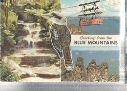 BLUE MOUNTAINS,VEDUTE,VIAGGIATA 1965,.N4896 - Sydney