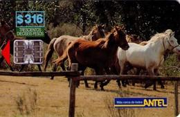 TARJETA TELEFONICA DE URUGUAY, 25a (184) FAUNA - CABALLOS - Uruguay