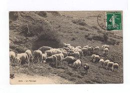 L'Auvergne. Un Pâturage. Troupeau De Mouton, Berger, Touriste. (2857) - Elevage