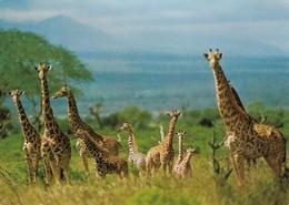 Girafes (2 Scans) - Girafes