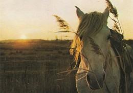 Contre Jour Sur Une Très Belle Tête De Cheval (2 Scans) - Horses