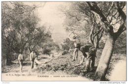 D06  CANNES  Dans Les Oliviers  .......... - Cannes