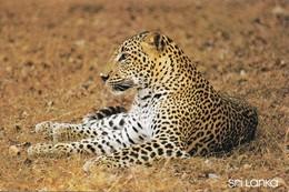 Sri Lanka Wilpattu Léopard (2 Scans) - Animals