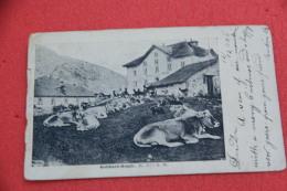 Ticino  Airolo Passo S. Gottardo L' Ospizio  Gotthard 1906 - TI Tessin