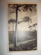 6cco -  CPA N°228 - BELLE ILE EN MER - Sous Bois à Bangor -  [56] Morbihan - - Belle Ile En Mer