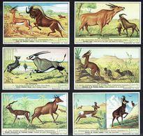 LIEBIG - FR -  6 Chromos N° 1 à 6 - Série/Reeks S 1559 - Les ANTILOPES: Gazelle, Gnou, élan, Oryx, Sassi, Chamois,Nilgau - Liebig