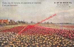 A. Op De Beeck Fils - Bloemen - Putte - Putte