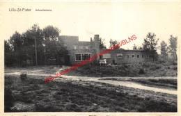 Schoolkolonie - Lille-St-Pieter - Lille - Lille