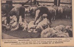 Moutons - Ces Beaux Moutons Vous Apportent Leur Laine  : Achat Immédiat - Autres