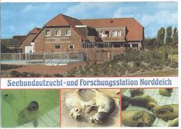 Norden Norddeich - Seehundaufzucht Und Forschungsstation  Mehrbild (4)   -  (13650-031) - Norden