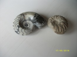 Lot De 2 Ammonites 100 Grs - Fossils