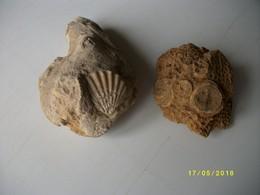 Lot De 2 Fossiles 600grs - Fossils
