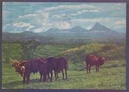 RUANDA-URUNDI  RWANDA Picture POSTCARD - Cliche Congo Tourisme, Postal Used 1959 POST CARD - Ruanda-Urundi