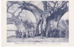 0600 Baobab Géant Dans Le Centre Africain - Central African Republic