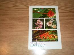 Belize Flowers - Belize