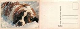 Saint Bernard Dans La Neige - Chiens