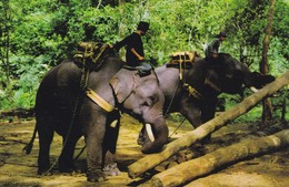 CARTOLINA - POSTCARD - THAILANDIA - ELEPHANTS WORKING IN FOREST CHIENGMA I NORTH THAILAND - Tailandia