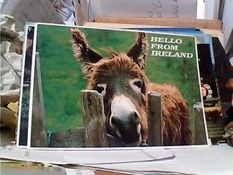 EIRE IRELAND ASINO DONKEY VB1993  GR1157 - Irlanda
