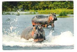 Africa - Mali - Hippo - Hippopotamus Amphibius - Nilpferd - Flusspferd - Nice Stamp - Mali