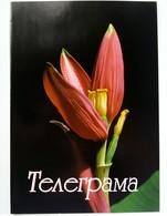 Greeting TELEGRAM Flora Flower -  Bulgaria - Unclassified