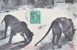 FRENCH  INDO-CHINE  HANIO  To  FRANCE  PPC  TIGERS - Indochina (1889-1945)