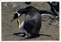 FALKLAND ISLANDS - SEA LION LODGE 2005  OS5 - Falkland Islands