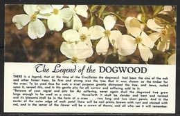Christian Postcard, Legend Of The Dogwood, Unused - Christianity