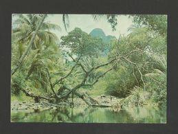 SÃO TOMÉ E PRINCIPE 1960years Postcard EX PORTUGUESE AFRICA AFRIKA Z1 - Sao Tome And Principe