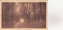 CPA - HOULGATE - Le Bois De Boulogne Avenue - Houlgate