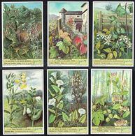 LIEBIG - FR -  6 Chromos N° 1 à 6 - S 1624 Série/Reeks  - PLANTES GRIMPANTES. - Liebig