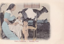 CUBA - Chiva Criandera - Autres
