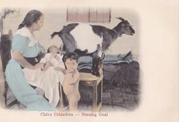 CUBA - Chiva Criandera - Cartes Postales