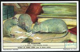 LIEBIG - FR -  1 Chromo N° 1 - S 1655 Série/Reeks - Les RONGEURS: La Souris. - Liebig