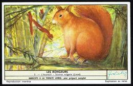 LIEBIG - FR -  1 Chromo N° 3 - S 1655 Série/Reeks - Les RONGEURS: L'écureuil. - Liebig