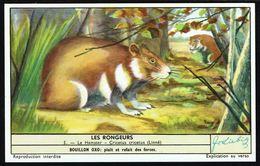 LIEBIG - FR -  1 Chromo N° 5 - S 1655 Série/Reeks - Les RONGEURS: Le Hamster. - Liebig
