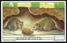 LIEBIG - FR -  1 Chromo N° 6 - S 1655 Série/Reeks - Les RONGEURS: Le Rat Noir. - Liebig